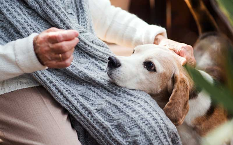 4 Therapy Animals for Seniors